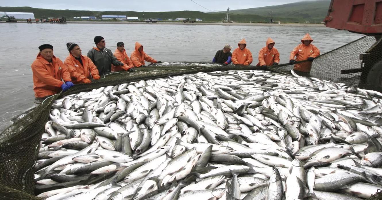 Промысел лосося