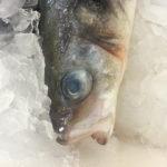 Глаза несвежей рыбы