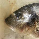 Глаза свежей рыбы